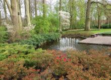 projektowanie ogrodów wodnych